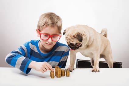 Junge beschäftigt Mops mit Intelligenzspiel